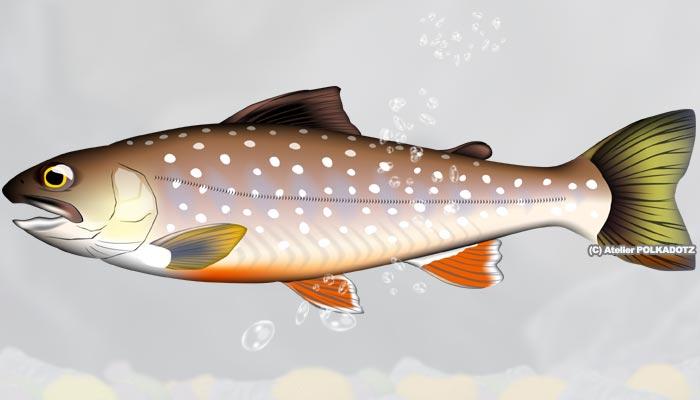 イワナ 魚イラスト Jpg Ai形式 個人利用 商用ok あとりえポルカドッツ