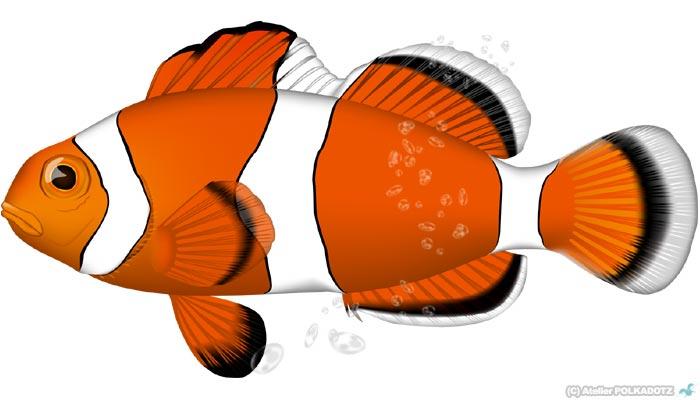 カクレクマノミイラストベクターai形式海魚 あとりえポルカドッツ
