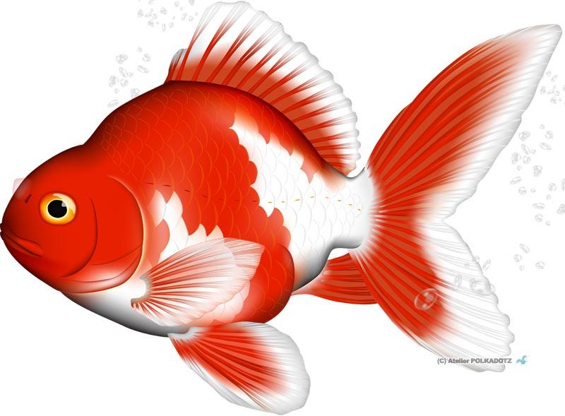 金魚イラスト 琉金 リュウキン 無料画あり 二次使用ok あとりえポルカドッツ