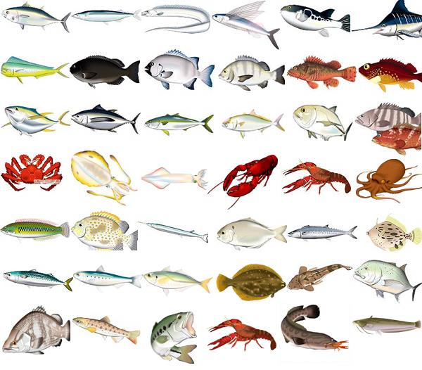 魚イラストいきものイラストを作成提供 あとりえポルカドッツ